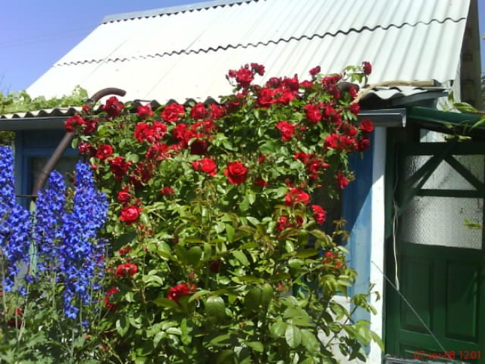 Продам приватизированный дачный участок 10 соток, г.Красный Лиман , Зеленый Клин 63466