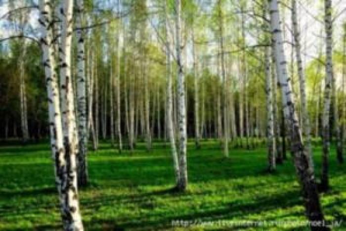 Продается  участок в живописном месте - село Микулинцы,  25 км  от Винницы,  Бар 63531