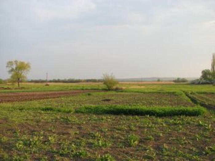 Продается участок земли в Ямполе для ведения личного сельского хозяйства с возмо 63754