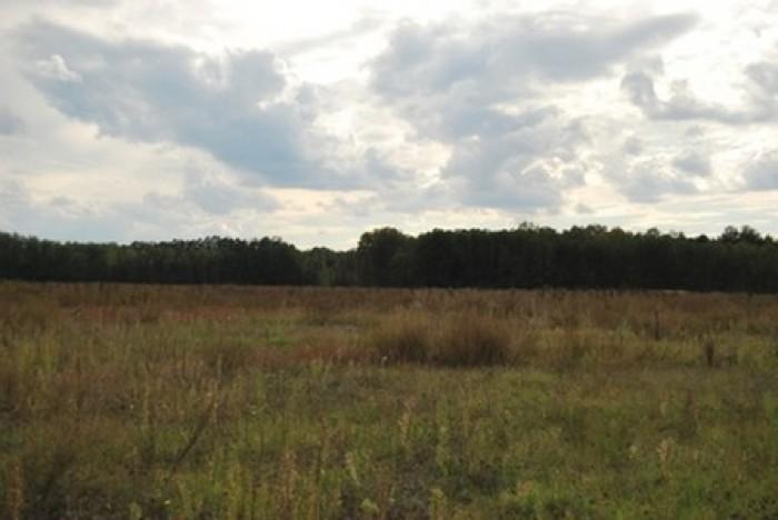 Участок, Киевская область, продам земельные паи от 2.5 га до 10 га, размещены в  631044