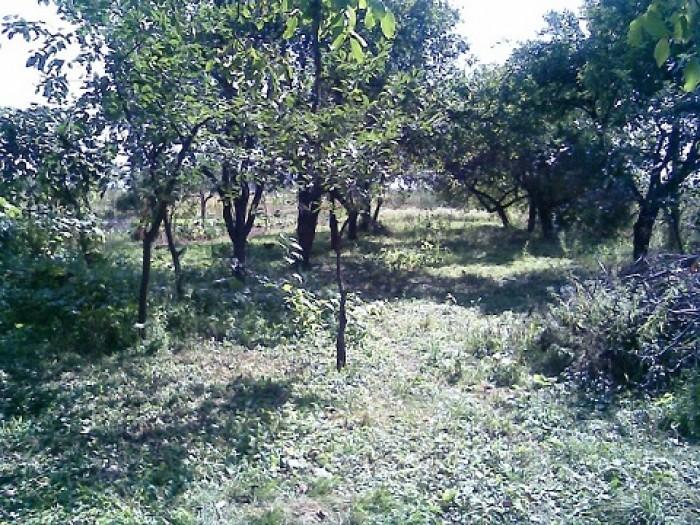Вода, світло, газ, сухий підвал, сад з плодових дерев, гараж, колодязь, виноград 622059