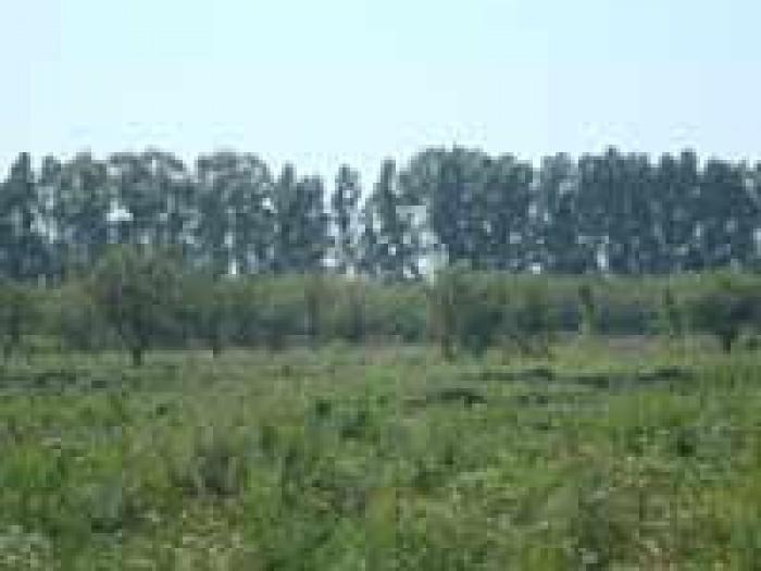 Продаем земельные участки Киевская область Васильковский район, Крушинка. Вы мож 631388
