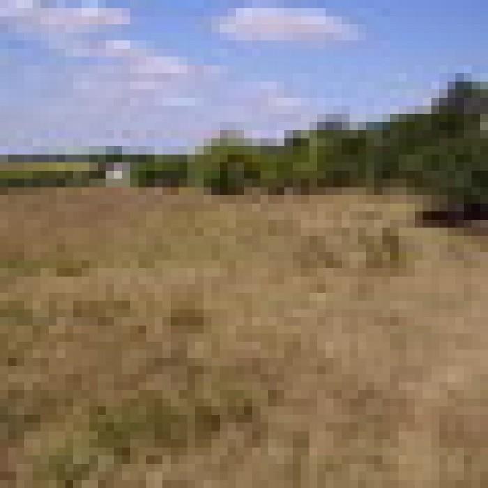 Продам 5 земельных участков, по 20 соток(1ГА), 130у.е. за сотку, форма прямоугол 631520