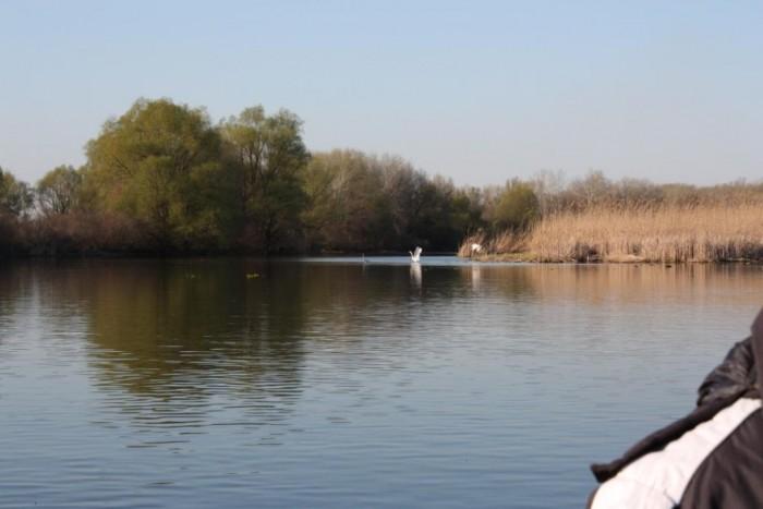 Заповедная зона, множество каналов и проток место нереста рыбы, водоплавающих, п 623410