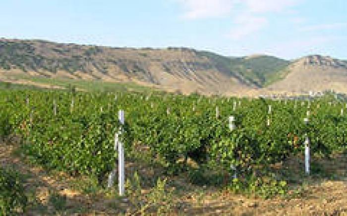 Земельный участок 6 соток, в Судакском регионе, недалеко от мыса Меганом, эколог 631707