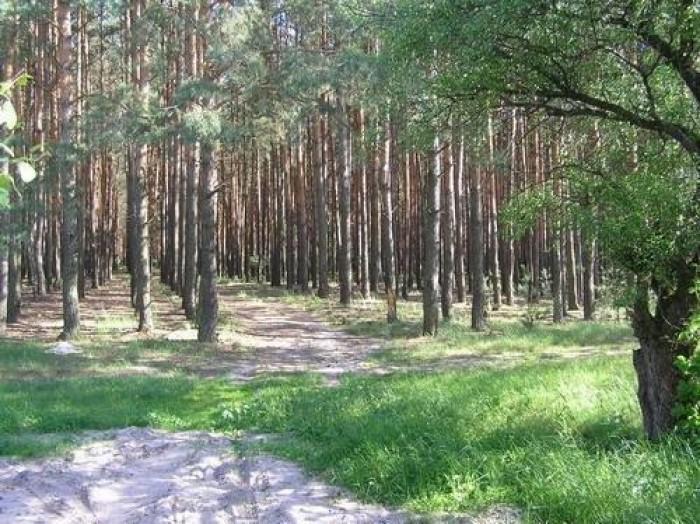 Участок в Горенке (рекреационная зона) в тихом месте у леса. 10 соток.Адрес -  c 631709