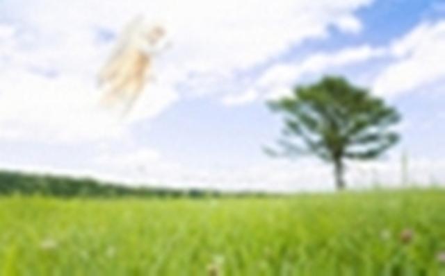 1.1. Продам СВОЙ участок 23 сот. В Броварском р-не